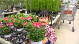봄 꽃 구경을 하러 가다