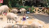 돼지가 커졌어요 / 워터파크에서 자동차 타기 놀이