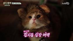 산타쿵&사자몽 심쿵 아이컨택 영상