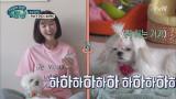 이수경, 부다&동동 천재견 만들기 프로젝트!!