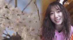 벚꽃 만개한 제주의 봄, 박신혜 행복지수 상승?!^ㅡ^