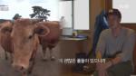 소에게 다가가는 법을 익힌 소지섭 (ft. 소에게 보내는 영상편지)