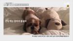 시청자 응모 2차 ASMR 행복실험 영상 공개 ♥ #1일1소확행