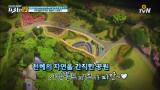 현지인 강추! 일본의 히든 꽃놀이 스팟 ′노코노시마′
