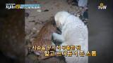 물에 빠진 새끼사슴 구한 구조 견(犬) 스톰