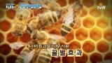 그 많던 꿀벌은 어디 갔을까?  [지구를 멸망시키는 인간의 탐욕19]