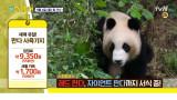 [선공개] '세젤귀' 판다들이 모여있는 세계 유일 판다 사육기지♡