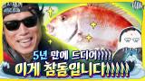 (감격) 이게 참돔입니다!!!!! 5년 만에 참바다와 만난 초대형 참돔