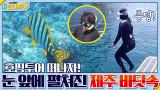 ′호핑투어′ 물 속 입수! 눈 앞에 펼쳐진 코발트빛 제주 바닷속♥