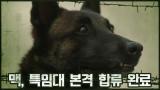 ※전입신고※ 군견 맥, 특임대 본격 합류 완료 #멍♥