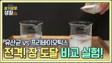 [전격 실험] 유산균 vs 프리바이오틱스 장 도달 비교 실험!